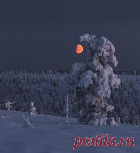 Великолепие Царицы Ночи! Застенчивая луна и зимний рай... Волшебство природы! Желаю всем этой зимой попасть в сказку и получить кусочек счастья Пусть даже в самую холодную погоду, у вас всегда будет тёплое настроение...