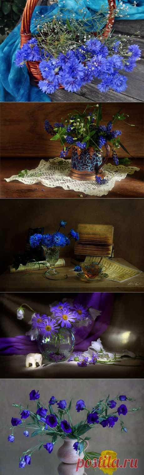 Синие цветы.