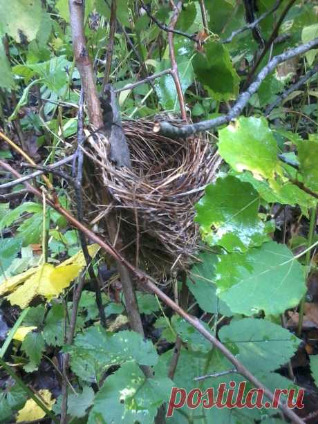 Покинутое гнездо