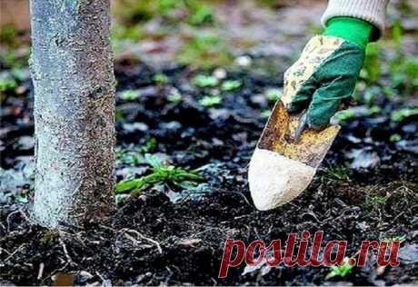 Чем лучше подкармливать плодовые деревья и кустарники осенью, хорошая подкормка Важной процедурой для плодовых деревьев является подкормка. Она благоприятствует росту самих деревьев и росту урожая в будущем. Кустарникам и деревьям питательных веществ требуется гораздо меньше, чем овощам. Это связано с тем, что корни у кустарников и деревьев проникают намного глубже, где проще добыть необходимые витамины. Для сада подкормки проводить лучше осенью.