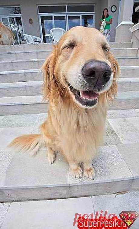 Самые красивые породы собак - Самое красивое , прекрасное - Ветер странствий: форум заядлых путешественников