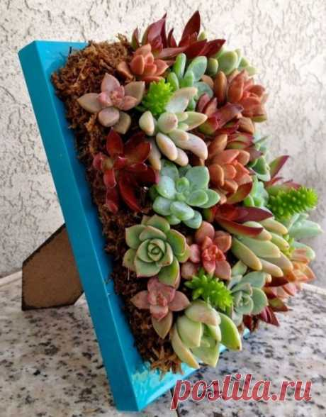 20 compositions from succulents which it is possible to make with own hands