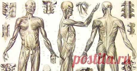 Врач: «Эти золотые правила самоисцеления работают лучше лекарств…» Человеческий организм — сложнейшая из систем. Порой мы даже и не догадываемся, на что способны. Сила слова и человеческой мысли обладают невообразимой исцеляющей энергетикой, и, кажется, бесполезно...