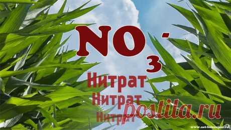 """Почему нитраты и нитриты вызывают рак?   Самыми """"знаменитыми"""" нитратами и нитритами являются нитрит калия (Е249), нитрит натрия (Е250), нитрат натрия (Е251) и нитрат калия (Е252).  У них много применений, но мы сосредоточимся на тех которые связанные с питанием человека."""