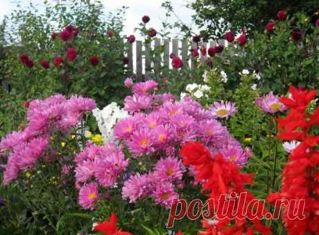 10 садовых хитростей