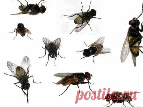 Картинки мухи (35 фото) ⭐ Забавник