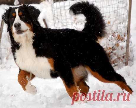 Симптомы и лечение клещевого энцефалита у собаки – Блог. Run, пользователь Марина Николаева | Группы Мой Мир
