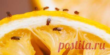 Эти неприятные насекомые способны облюбовать любое жилище. Обитатели городских и сельских домовых хозяйств ужасаются, неожиданно обнаружив у себя колонии насекомых.