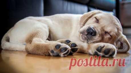 Какими характеристиками должен обладать ламинат, чтобы спокойно перенести когти собаки, не оставить пятен от урины и чтобы собака не боялась подскользнуться? Как выбрать ламинат для собаки правильно расскажут специалисты из Костромы   #ламинатдлясобаки#лучшийполдлясобаки#прочныйламинатдлясобаки#ламинатдляживотных#ламинатдлященка#Кострома#Stonefloor