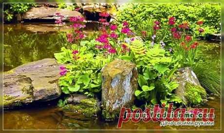 Цветы и другие растения для сырого, «мокрого» сада Содержание ✓✓ ИЗ ПРИРОДЫ✓ СРЕДНЕРОСЛЫЕ САДОВЫЕ РАСТЕНИЯ✓ ВЫСОКОРОСЛЫЕ ДЛЯ ДАЛЬНЕГО ПЛАНА✓ НА ПЕРЕДНЕМ ПЛАНЕ✓ РАСТЕНИЯ ДЛЯ ВЛАЖНЫХ ПОЧВ – ВИДЕО ЧТО ПОСАДИТЬ НА ВЛАЖНОМ УЧАСТКЕ? Сырой участок можно преобразить в стильный уголок, используя влаголюбивые дикорастущие и садовые растения. ИЗ ПРИРОДЫ Взгляните пристальнее, что есть на лугу в окрестностях. По самому краю канав, например, можно найти …