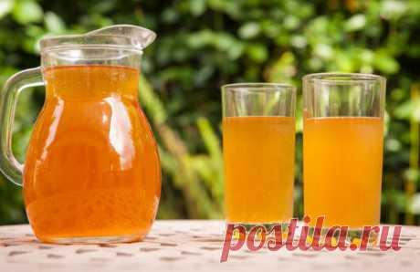 Польза чайного гриба. Как самому вырастить гриб и делать оздоровительный напиток - Postel-Deluxe.ru