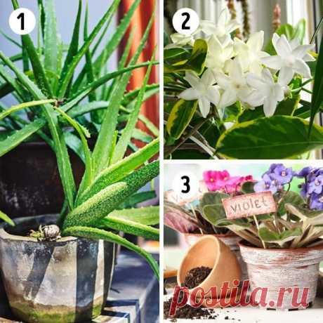 15 лучших растений для каждой комнаты  Комнатные растения приносят в дом уют и становятся украшением интерьера.  Но среди огромного разнообразия очень трудно определиться с выбором.  Мы собрали по 3 растения для 5 комнат, которые не только украсят ваш дом, но и принесут пользу.