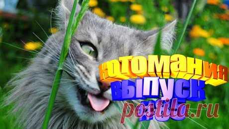 смешные коты видео, видео котов смешные, смешной кот видео, видео коты, видео коты приколы, видео про котов, видео кот, видео котов приколы, говорящие коты видео, видео смешные животные, животное смешное, видео смешное животные, видео смешное животных, видео коте, коте видео, кот приколы, прикол коты, кошки видео смешное, кошки смешное видео, смешные кошки видео, смешные про кошек, смешных кошек, кошка смешное видео, кошка смешная видео, смешное о кошках, смешные кошки и, видео кошек