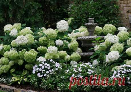 Flower bed with hydrangeas and perennials