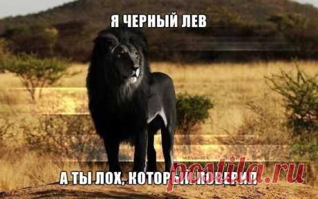 Факт дня   По статистике 30% всей вашей ленты ВК - ложь. Единственная группа ВКонтакте, которая активно занимается опровержением всех лже-постов, является группа . Хорошая идея - одобряем. И рекомендуем вступить - vk.com/vkscience