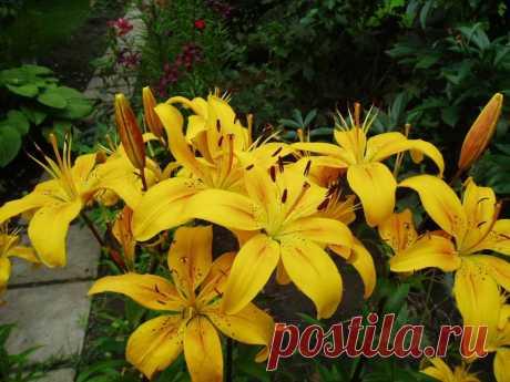 Нашатырный спирт – отличнейшее удобрение и защита растений | Домохозяйка