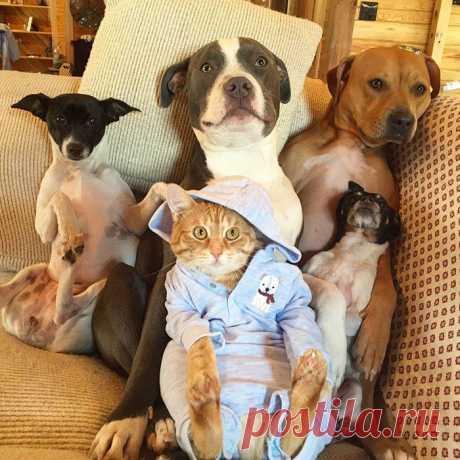 Эти животные такие разные! И все же они - неразлучные друзья!