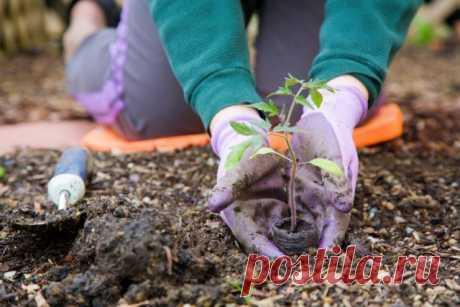 Высадка рассады овощных и декоративных культур – благоприятные дни в 2018 году | На грядке (Огород.ru)