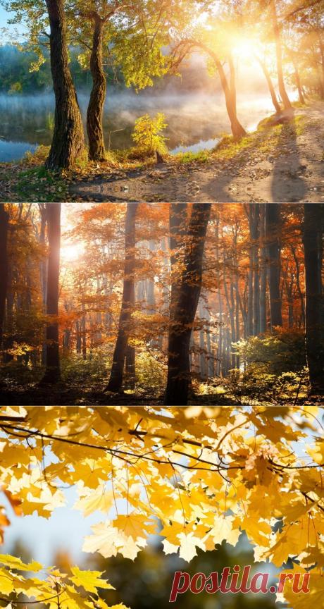 Осенний приветик