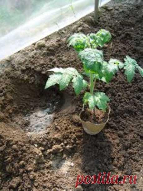 Биофильные элементы овощей - Сады Сибири