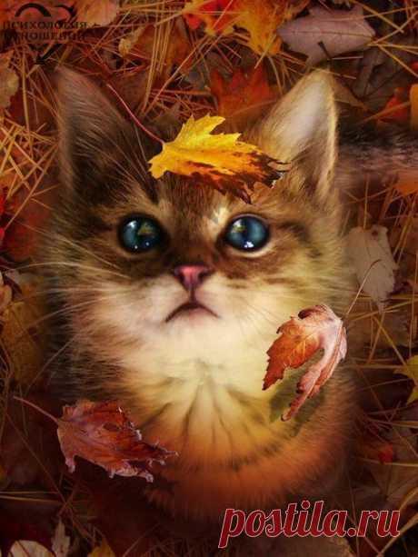 Если кончается лето – не беда. Осень - это начало другой сказки, которая не менее прекрасна...