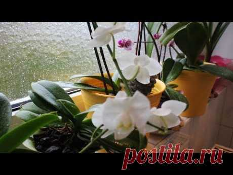 ОРХИДЕЯ-ФАЛЕНОПСИС ПОСЛЕ РЕАНИМАЦИИ В СУБСТРАТЕ С ДОБАВКОЙ ЗЕМЛИ #orchids #103 #oldenburg_ru - YouTube