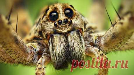 Больше никаких пауков в доме!