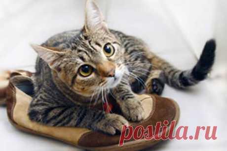 Что делать, если кот пометил ковер? Кошачья моча имеет резкий и крайне неприятный запах. К тому же, из-за содержания в ней мочевой кислоты, от этого запаха тяжело избавиться, особенно если лужа появилась на ковровом покрытии. Для борьбы...