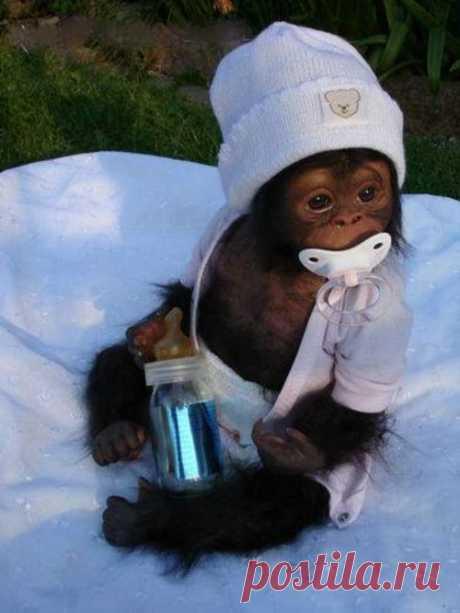 Милый ребенок обезьян | 30, муфлонов - но, видя это не милые | дизайн интерьера ... - ActingLikeAnimals.com