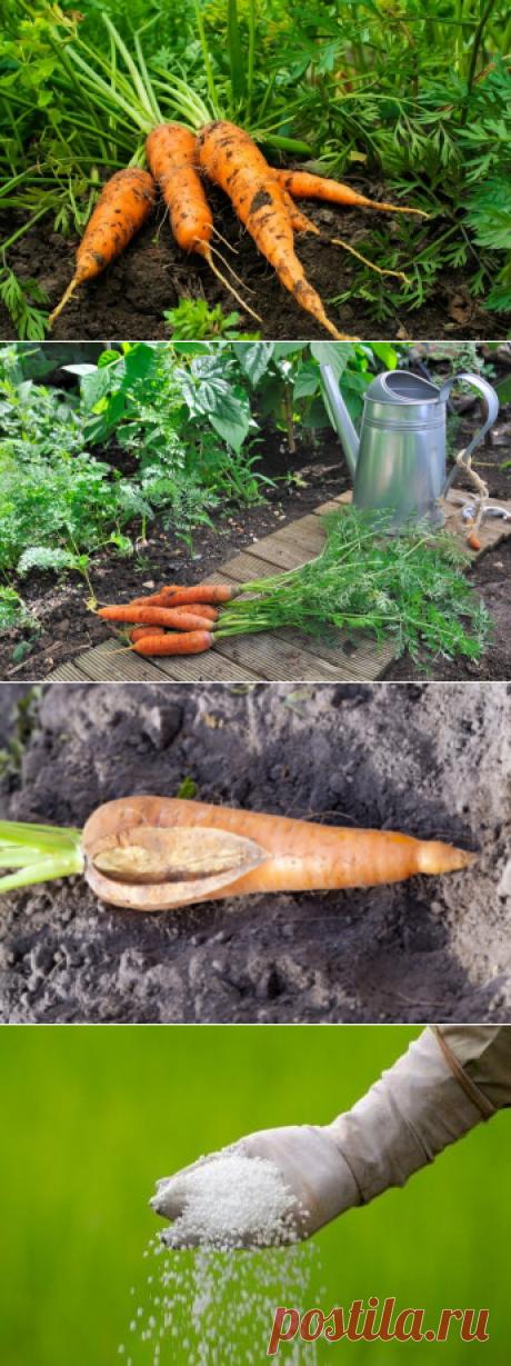 Хранение моркови — какие болезни ей угрожают Добрый день, мой читатель. Даже при качественной подготовке моркови после сбора урожая... Читай дальше на сайте. Жми подробнее ➡