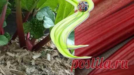 Витаминный богатырь. Что приготовить из ревеня кроме компота и голубцов | Дом, в котором хорошо | Яндекс Дзен Вкусные и полезные рецепты блюд с добавлением ревеня.