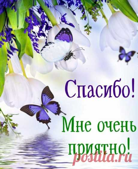 Открытка спасибо - бабочки на красивом цветочном фоне. Скачать бесплатно или отправить открытку.
