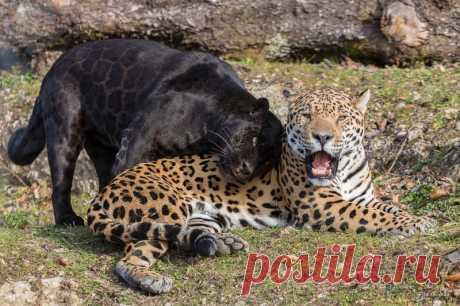 11 необычных помесей животных: подборка фото и фактов 11 необычных помесей животных, как выглядят гибриды. Фото и описание.