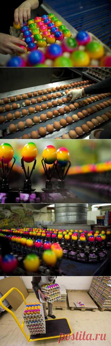 Как красят яйца к Пасхе в Германии(фото+видео) - Фото - Калейдоскоп Эмоций