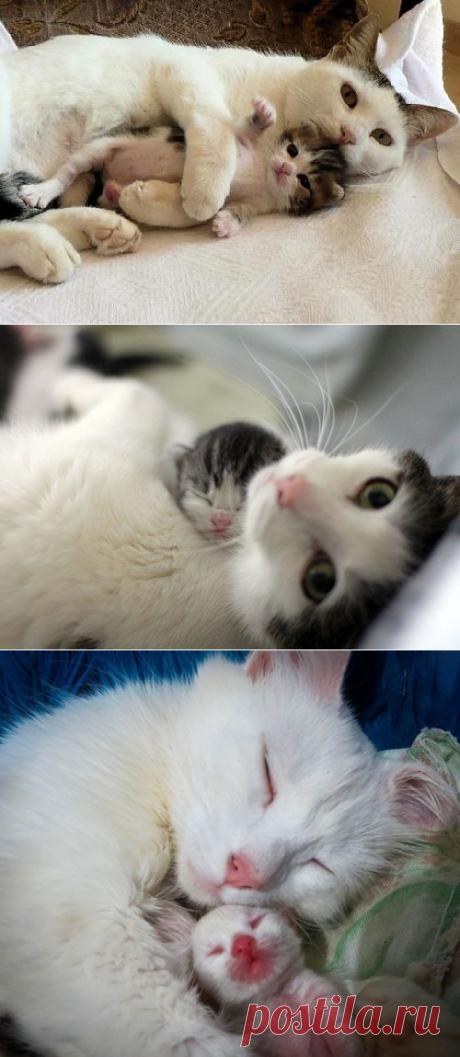 Новорожденные котяши и их кошкомамы.