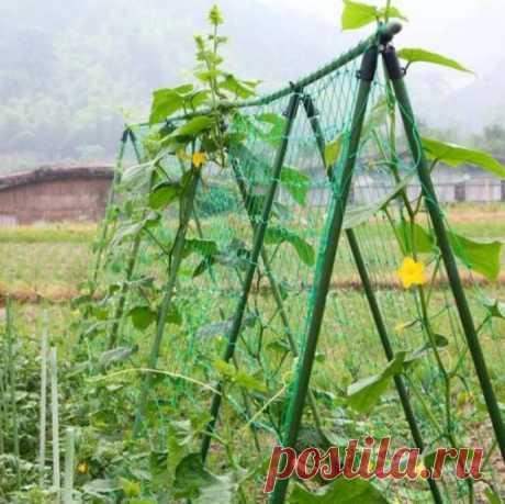Как правильно подготовить грядки для посева огурцов.