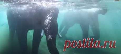 В Орегонском зоопарке группа слонов вовсю наслаждается летом, купаясь в просторном бассейне с фруктами (и ныряя на дно, где они кажутся лох-несскими чудовищами). А мы всей редакцией им завидуем.