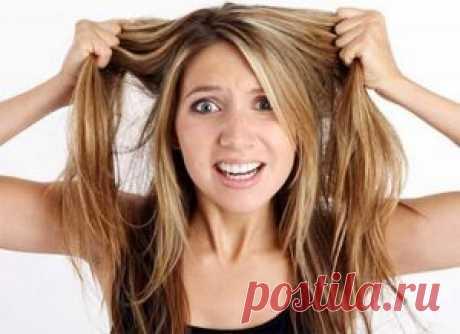 Почему секутся волосы? | Женский сайт - leeleo.ru