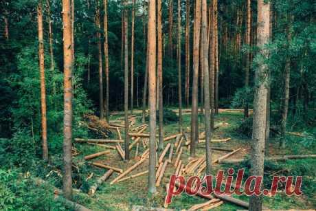 Норвегия объявила войну не просто вырубке лесов как таковой, но и всей отрасли, завязанной на продукции лесного происхождения.