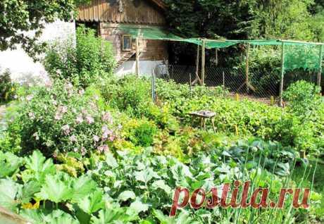 Июль — лето золотое: что обязательно надо сделать в саду и огороде   На даче   Яндекс Дзен