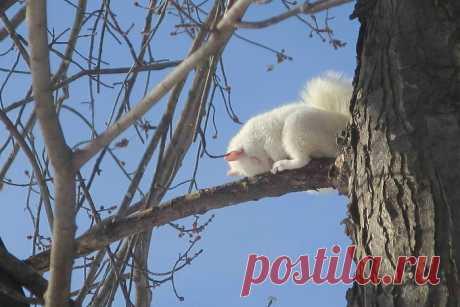 10+ фото белок, которые неуступают впривлекательности даже котикам. Ридус
