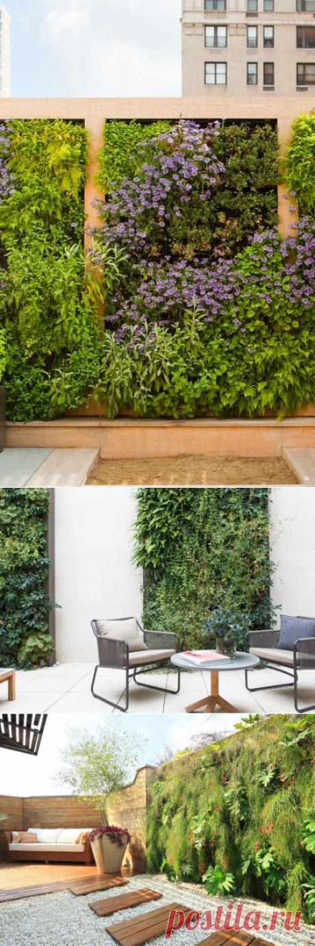 «Дышащие» стены: вертикальное озеленение, как способ декорирования и повышения экологичности — Дом и Сад