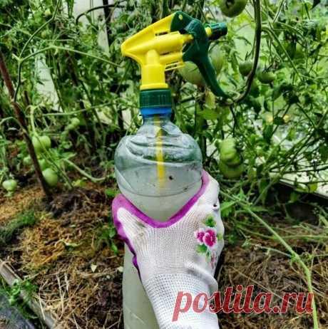 Биопрепараты на даче, которые нанесли вред огороду. Фитоспорин, триходерма… Интересные наблюдения с дождевыми червяками   Душой на даче   Яндекс Дзен