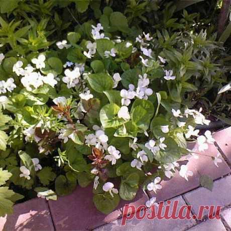Какие растения я посажу на кладбище   Сад Анны Гауэр   Яндекс Дзен