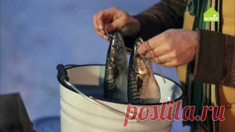 Коптим рыбу в ведре | Бобёр | Яндекс Дзен