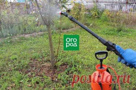 Чем опрыскать деревья от вредителей осенью | Уход за садом (Огород.ru)