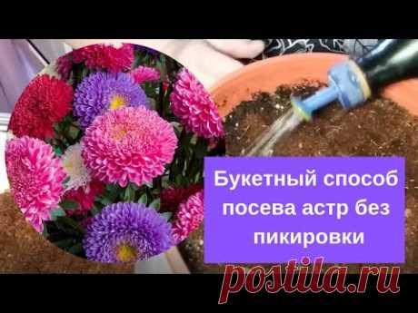 С цветами по жизни!: Букетный способ посева астр без пикировки