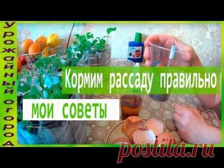 ЧЕМ И КАК ПОДКАРМЛИВАТЬ РАССАДУ!!! - YouTube