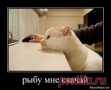 Торренты не только для людей))