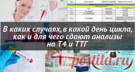 Анализы на ТТГ и Т4: когда сдавать, на какой день цикла, как правильно сдавать  Анализы на ТТГ и Т4: что это такое, когда сдавать, на какой день цикла, как правильно сдавать анализ на эти гормоны девушкам и женщинам.